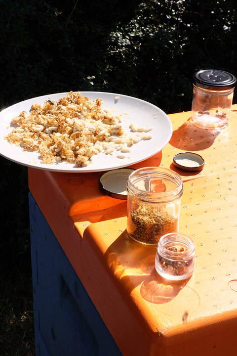 Produkter fra biene: honning, pollen, propolis, larver og bikake.