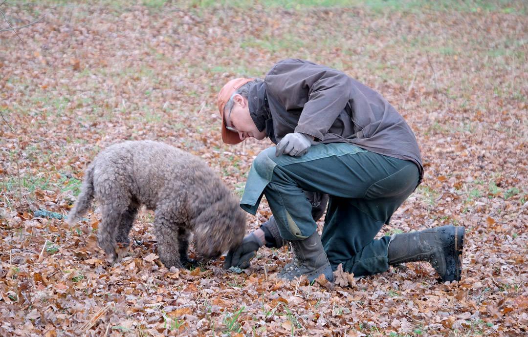 Trøffelhunden Bruno og Olof.