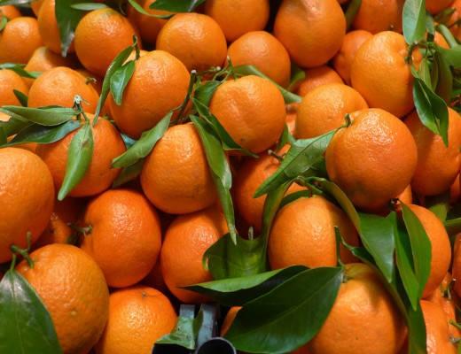 L1190789 520x400 - Mandarin og klementin: Smaker jeg forskjellen?