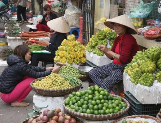 J49A8760 520x400 - Matlandet Vietnam
