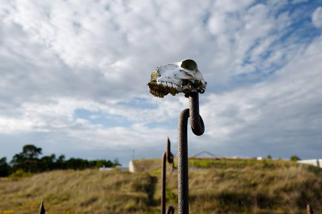 Helleskitchen.org , gotland