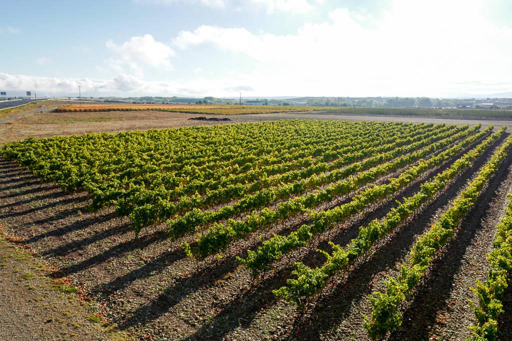 L1310567 - En vinrød tråd gjennom La Rioja