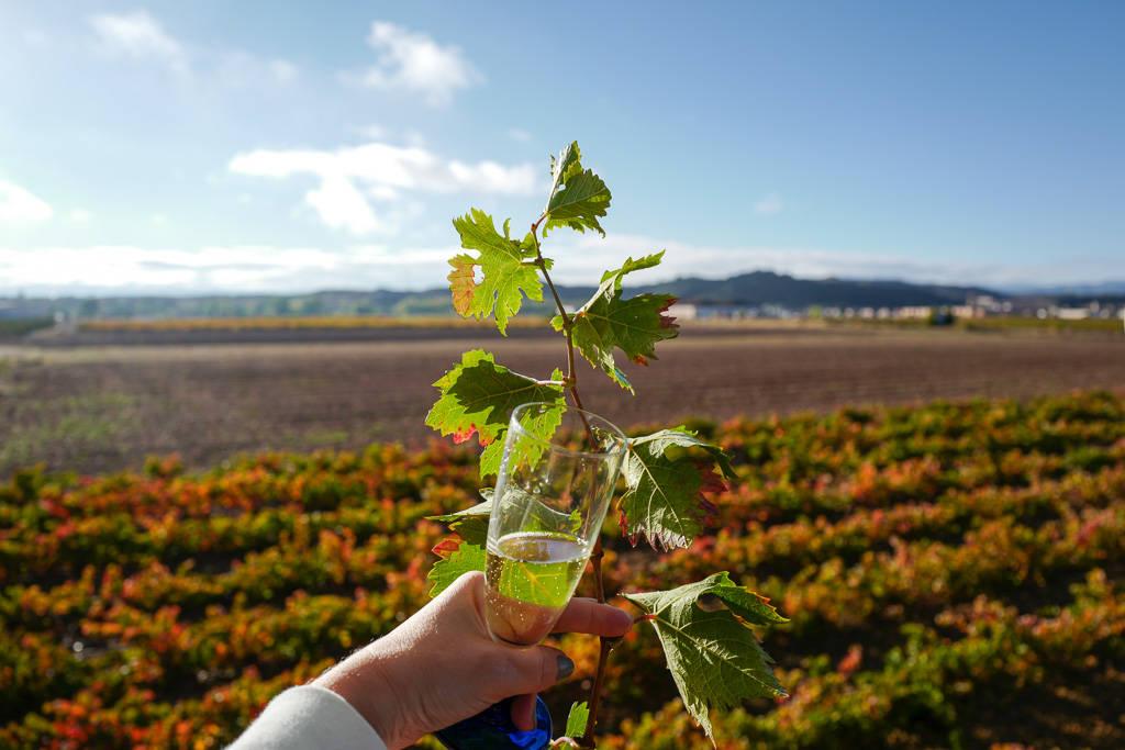 L1310577 - En vinrød tråd gjennom La Rioja