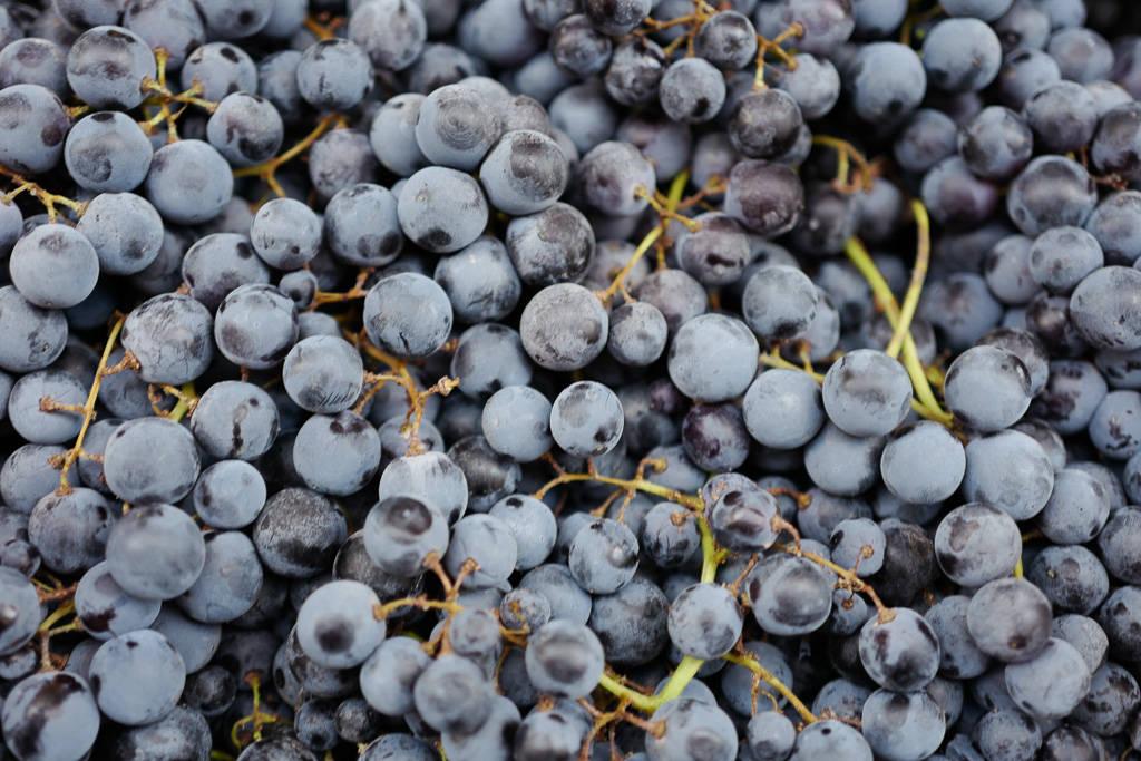 L1310827 - En vinrød tråd gjennom La Rioja