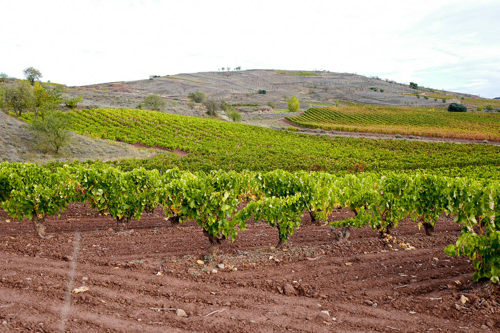 L1310851 - En vinrød tråd gjennom La Rioja