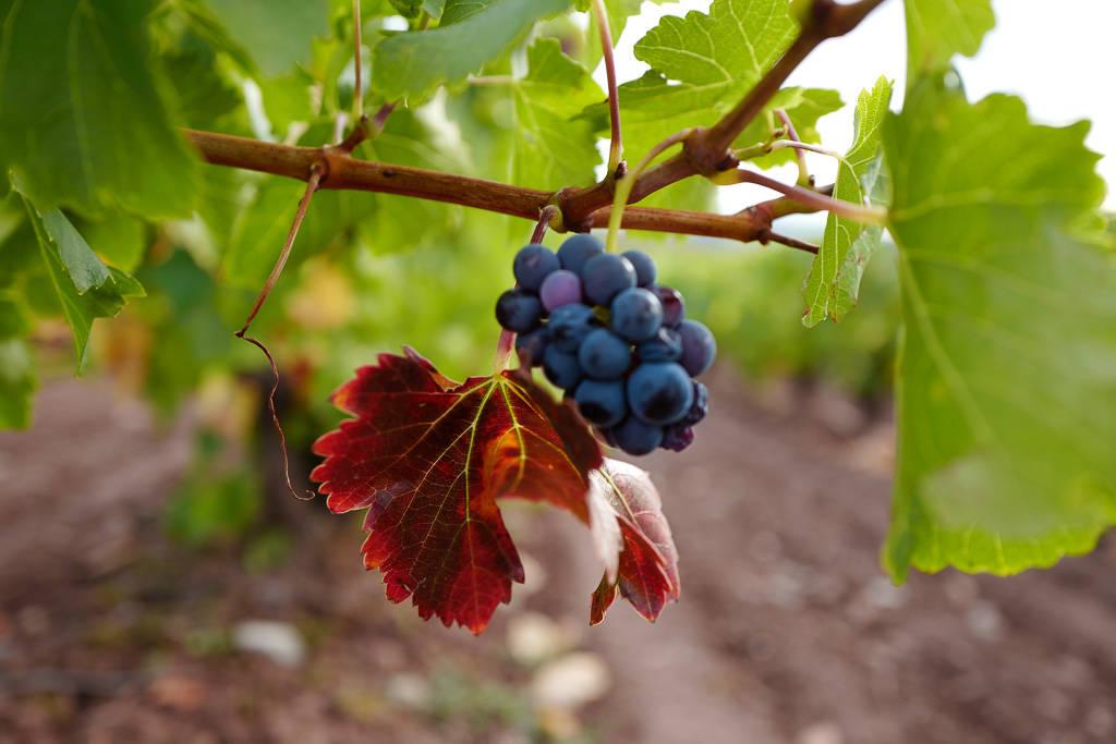 L1310854 - En vinrød tråd gjennom La Rioja