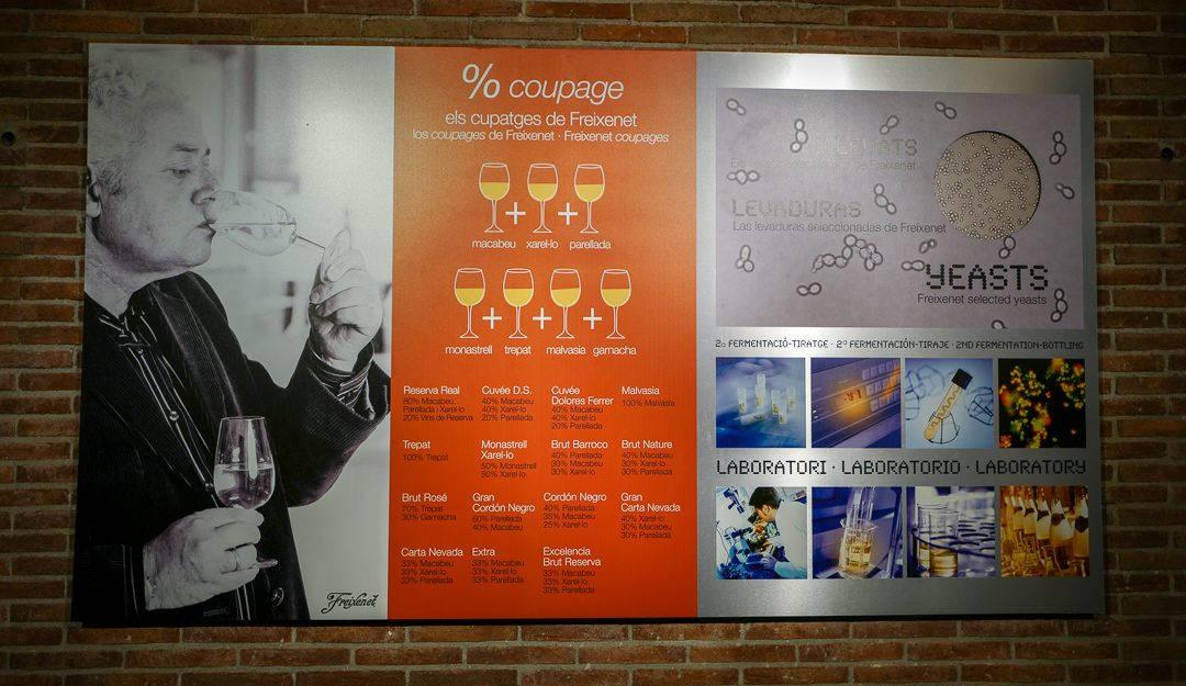 Barcelona helleskitchenL1430262 1 1080x625 - Kvinnene reddet cava-produksjonen. Nå er Freixenet verdens største cava-produsent