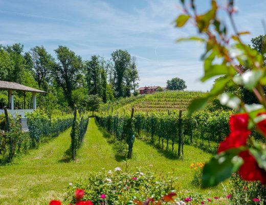Piemonte biella lessona helleskitchenL1460878 520x400 - Biella - vinområdet i Piemonte som reiste seg fra døden
