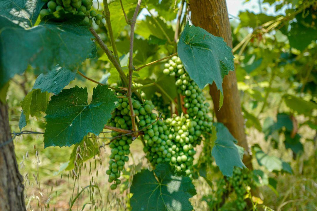 Tbilisi Georgia amberwine orangewine helleskitchenL1480421Tbilisi georgia amber wine helleskitchen 1080x720 - Georgia – landet der oransjevin har vært trendy i 8000 år