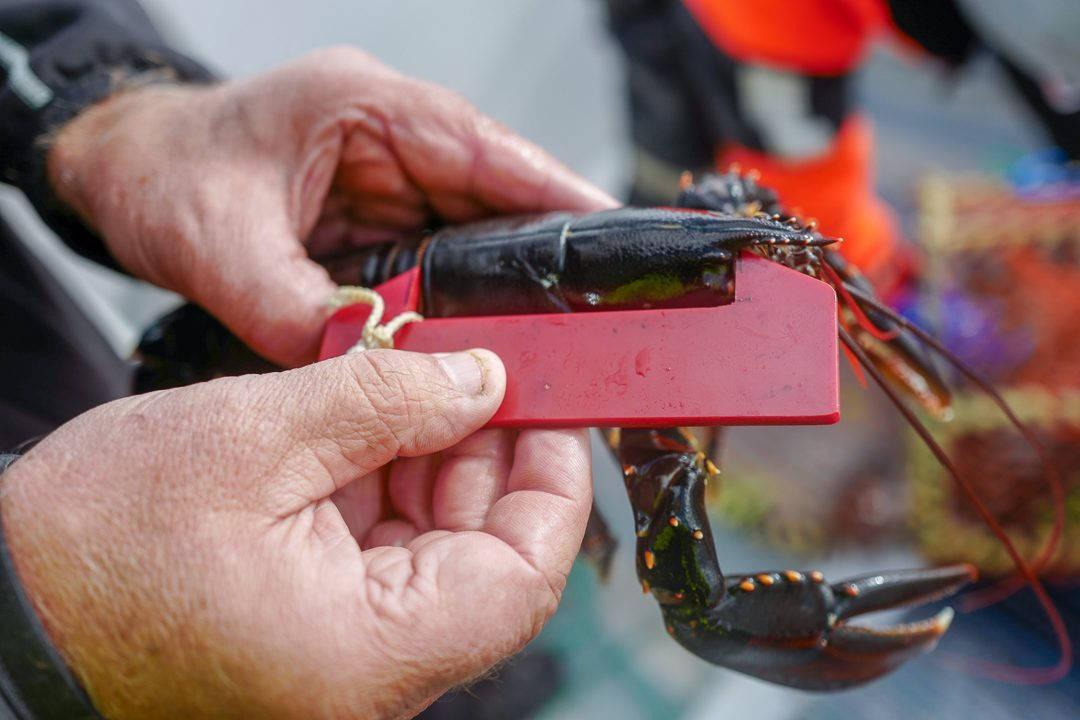 L1550709 1080x720 - På bærekraftig hummerfiske i Sverige