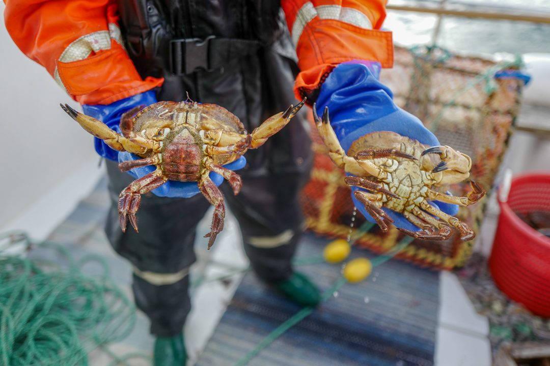 L1550722 1080x720 - På bærekraftig hummerfiske i Sverige