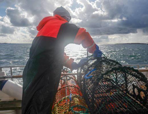 L1550753 520x400 - På bærekraftig hummerfiske i Sverige