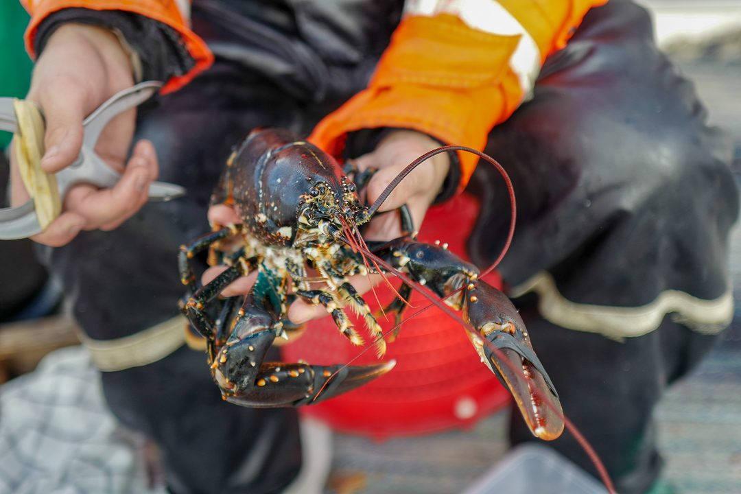L1550796 1080x720 - På bærekraftig hummerfiske i Sverige